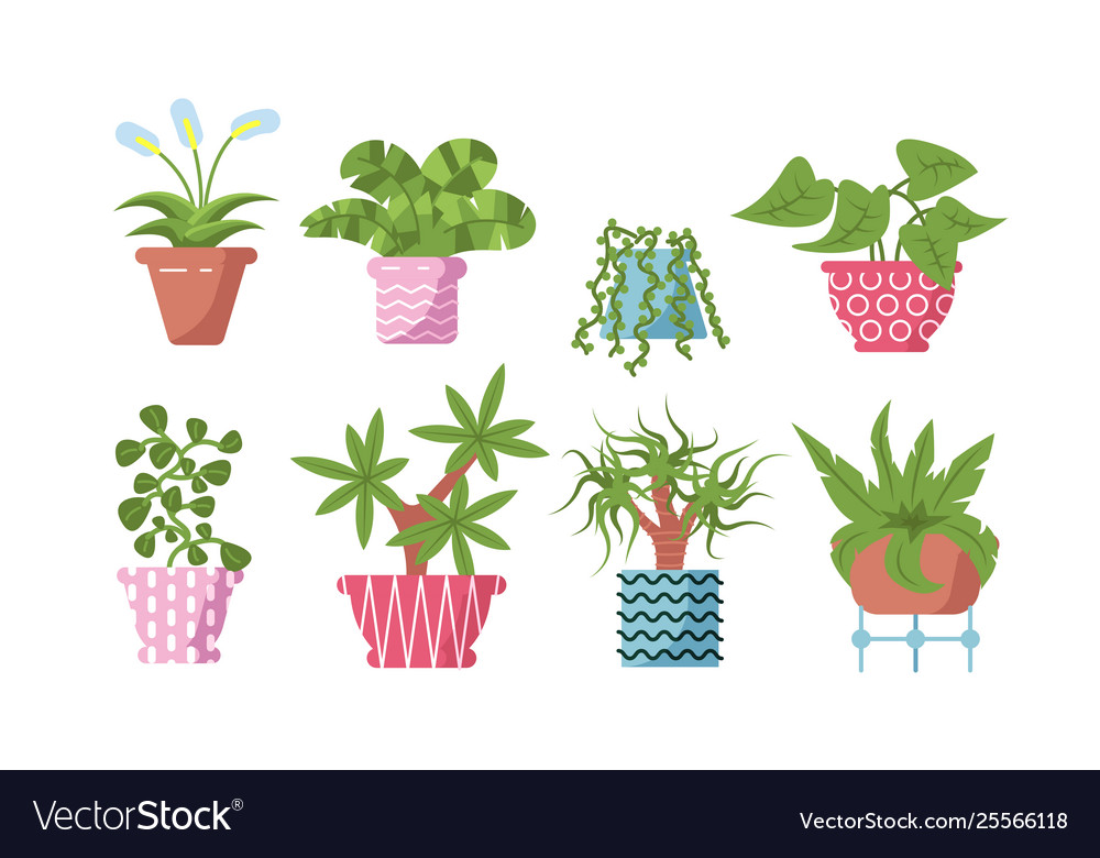 Home plants set vector