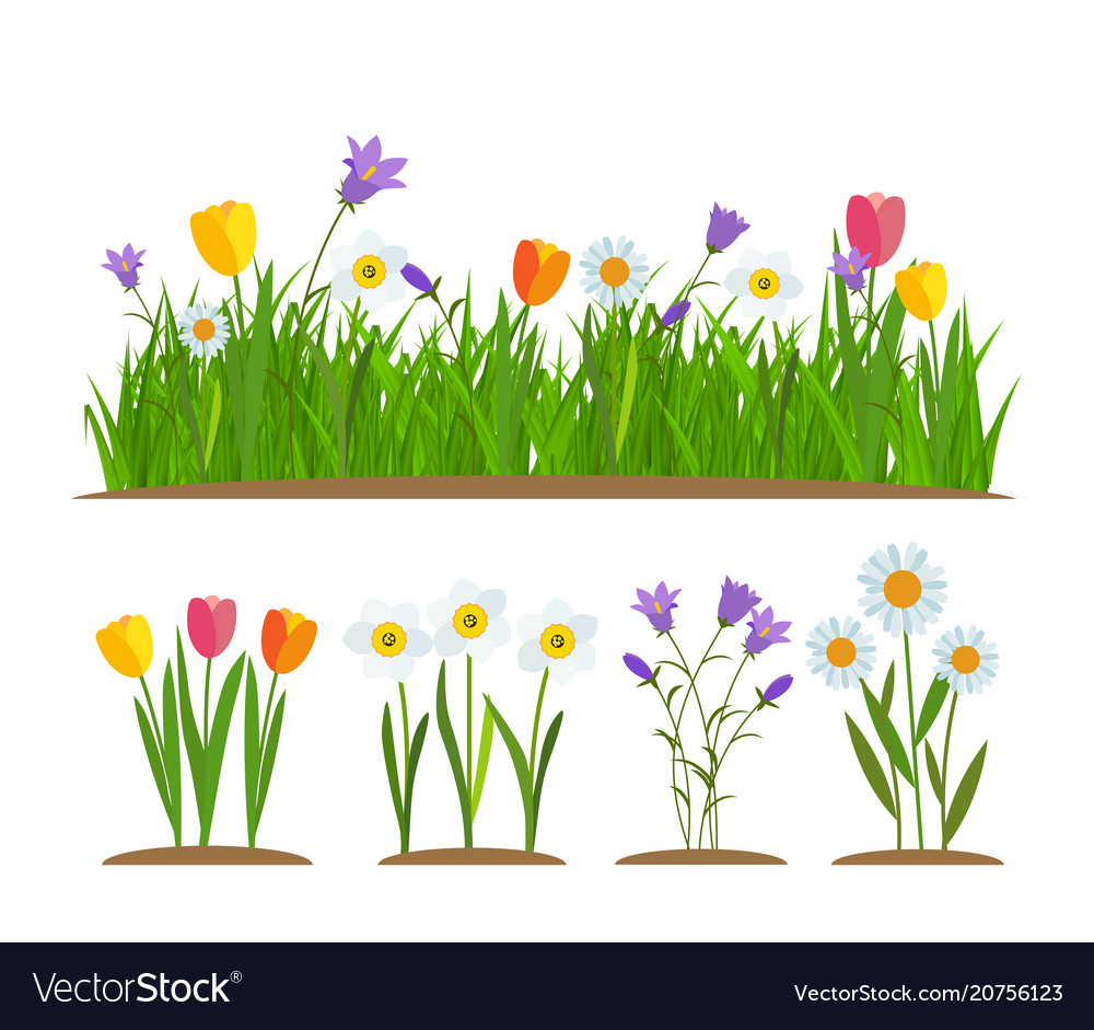 Grass and flowers border greeting card decoration vector image
