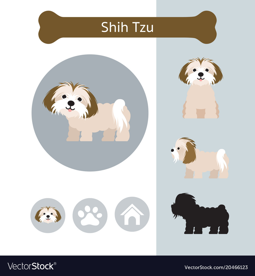 Shih Tzu Dog Breed Infographic Royalty Free Vector Image