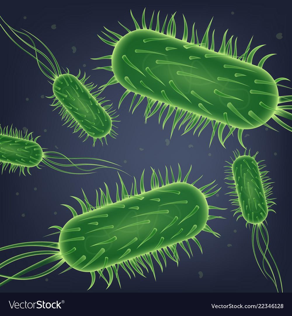 escherichia coli prostatitis modalitas