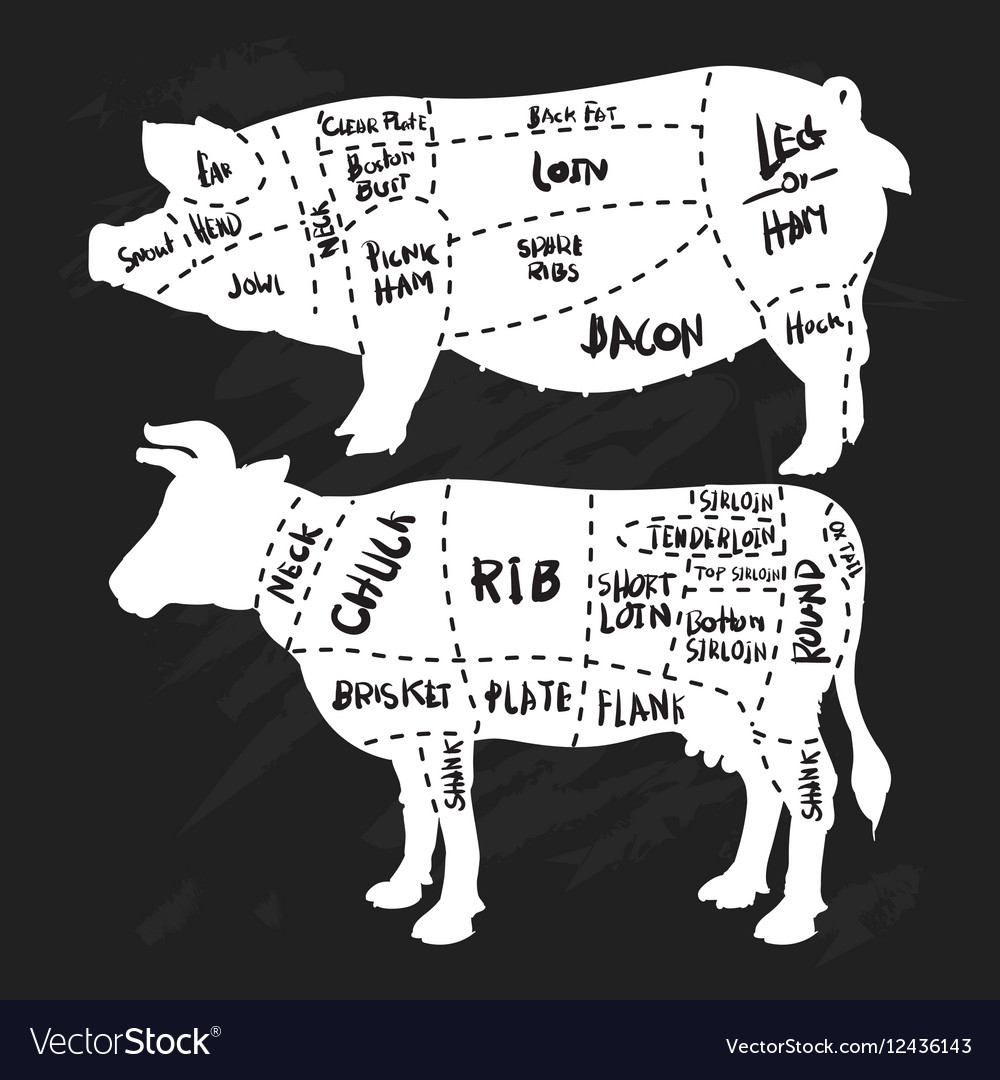 Hand Drawn Pork And Beef Cuts Diagram Butchery Meat Cut Diagrams Vector Image