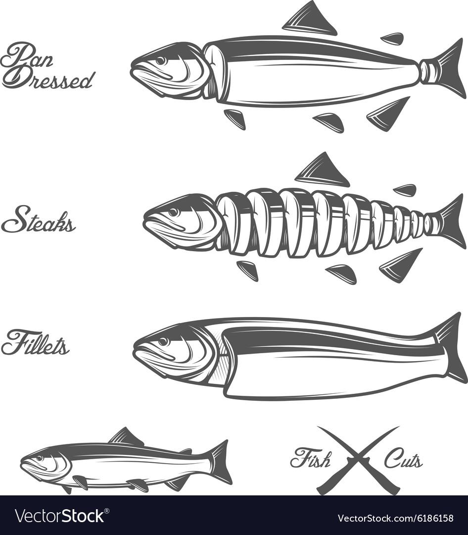 salmon cuts diagram vector image