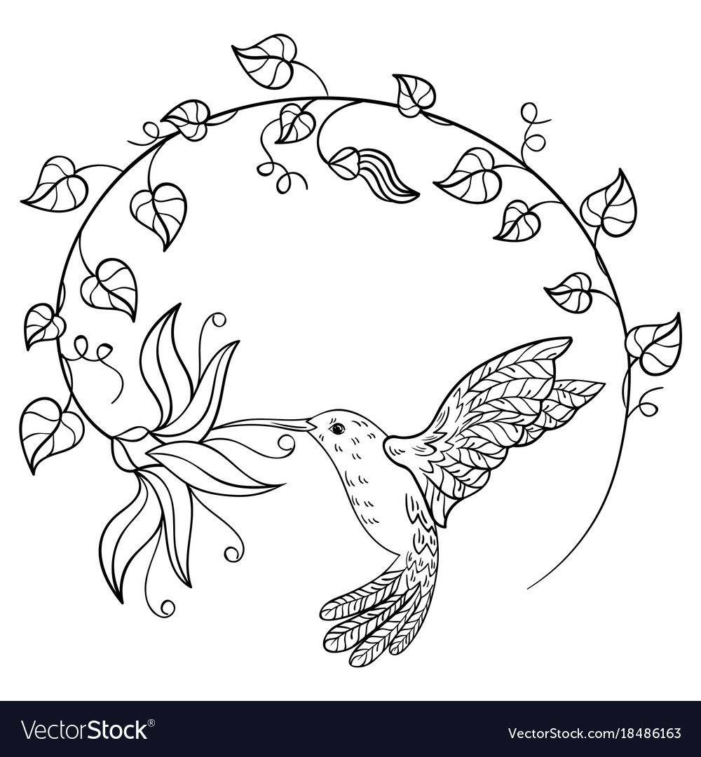 Hummingbird drinking nectar from a flower a vector image