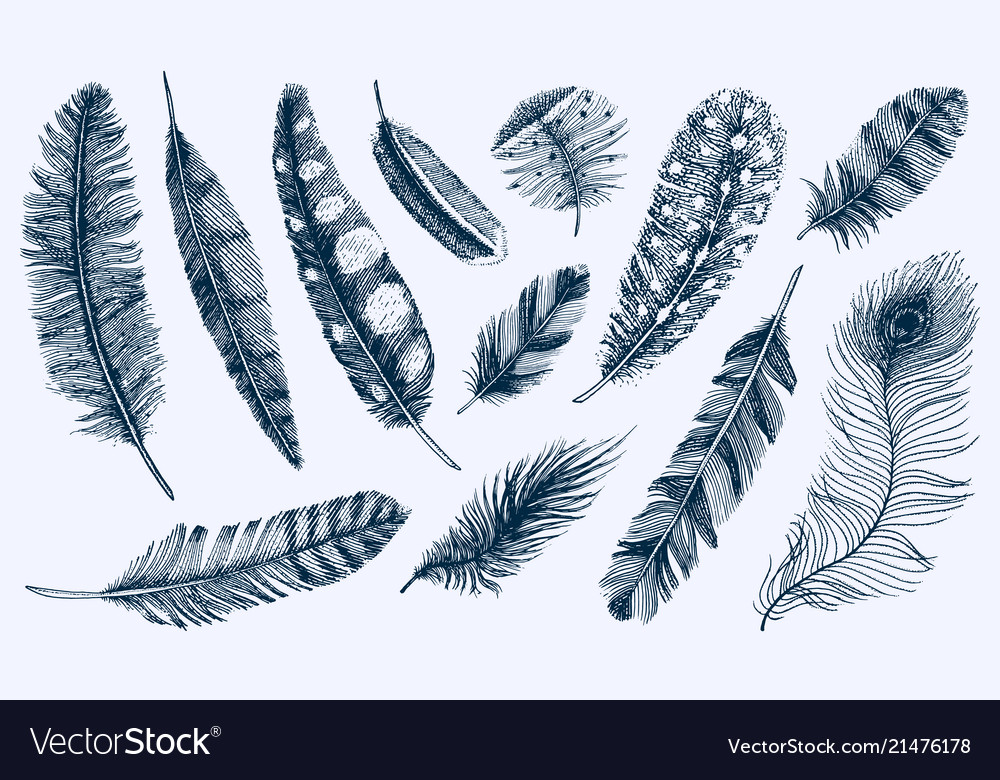 Set rustic realistic feathers different