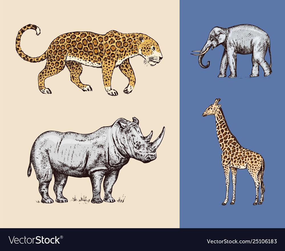 African animals rhinoceros elephant giraffe