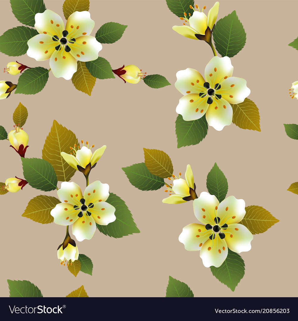 Seamless spring background with white flowers with