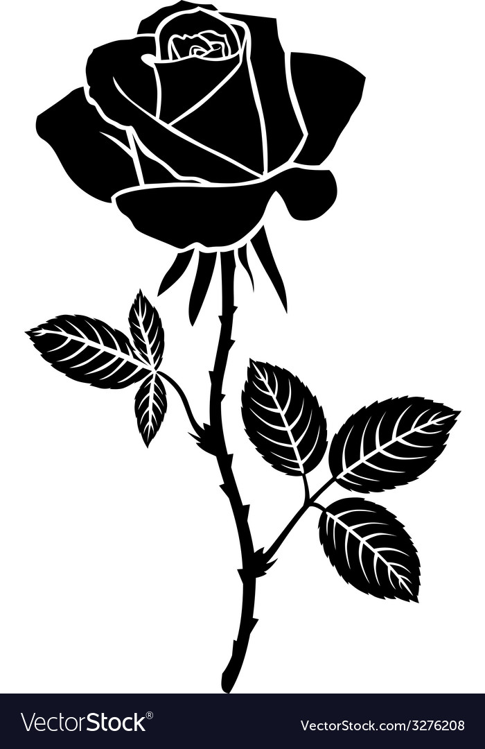 Sweet rose Royalty Free Vector Image - VectorStock