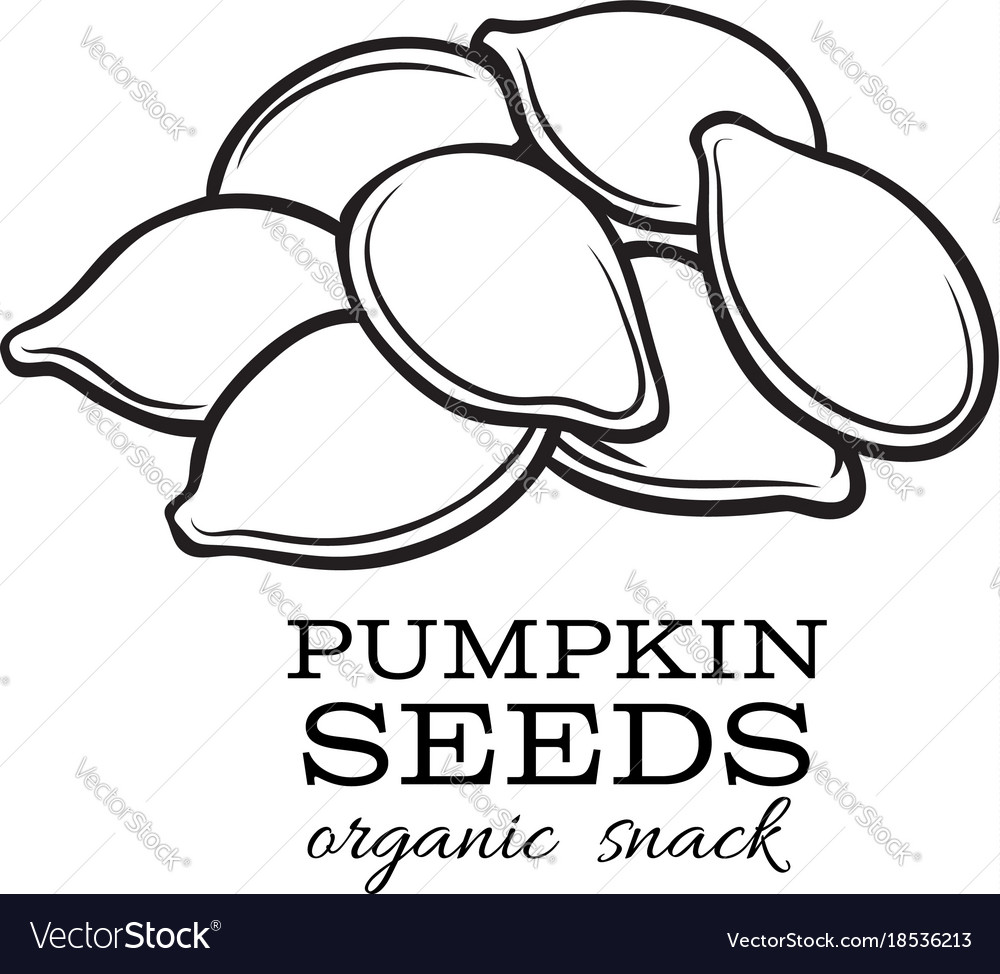 Pumpkin Seeds Royalty Free Vector Image Vectorstock