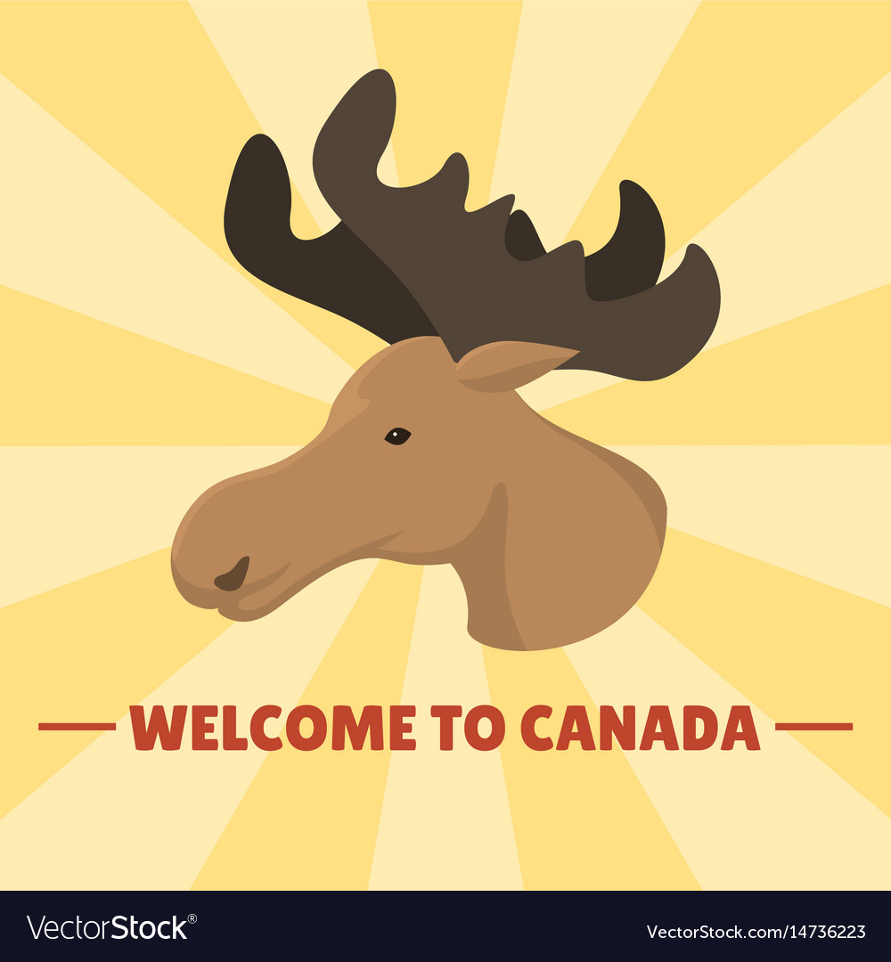 Moose head mammal trophy wildlife antler north vector image