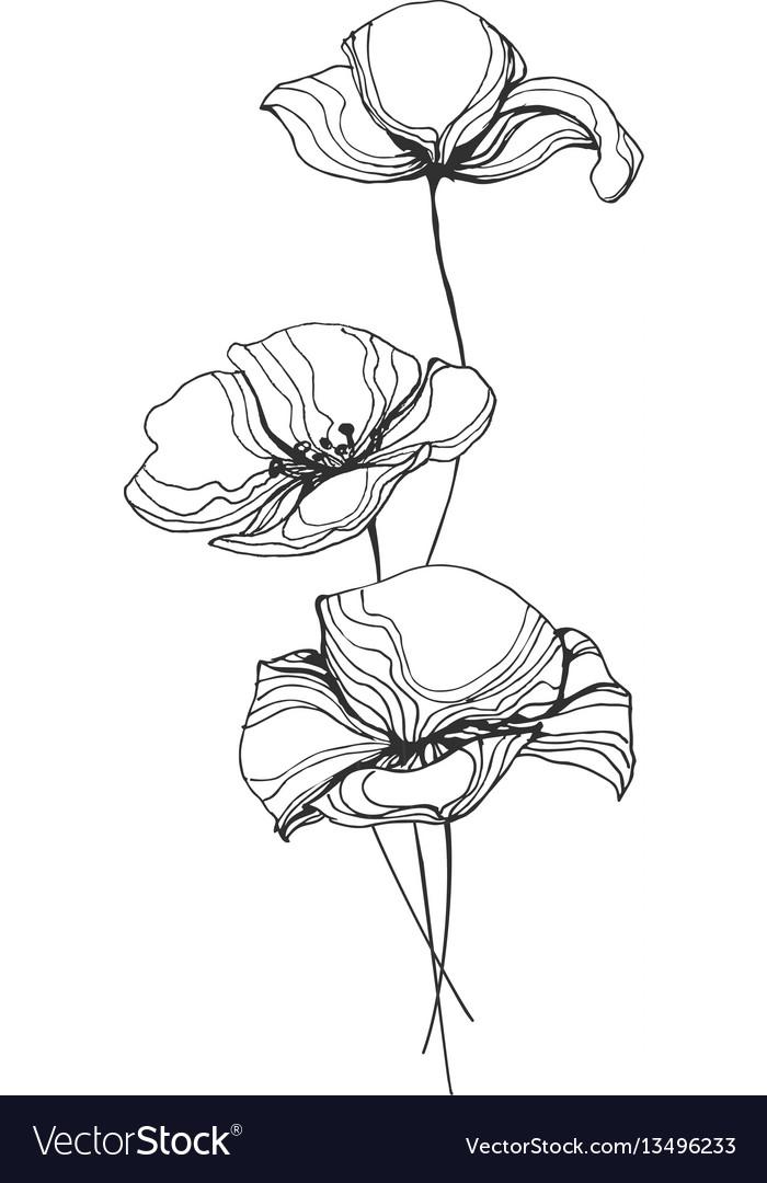 Poppies flowers line art
