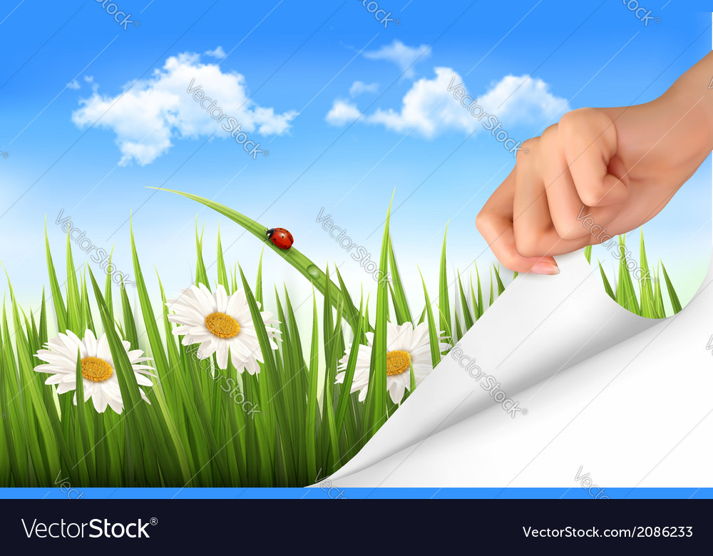 green grass blue sky flowers mountain spring background with sky flowers grass and vector image
