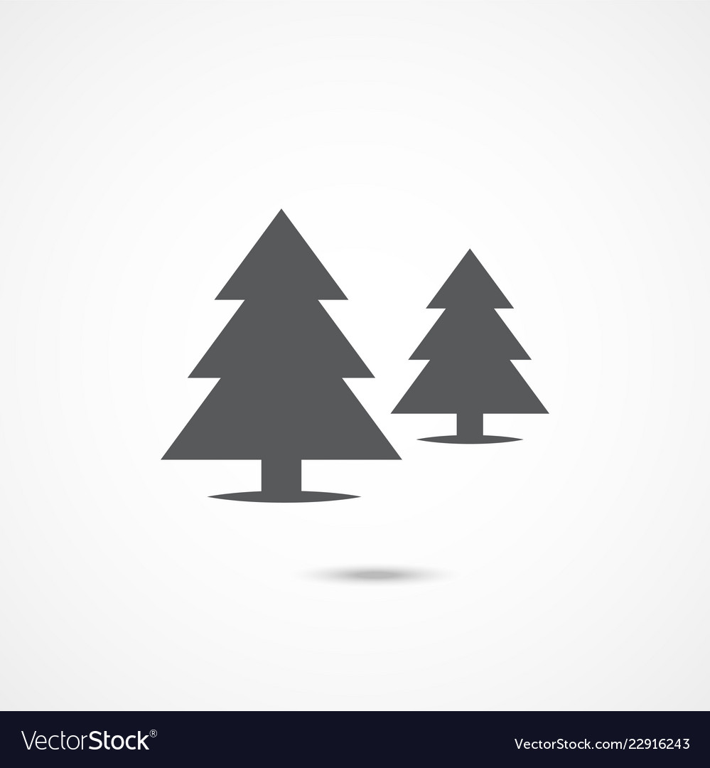 Spruce flat icon