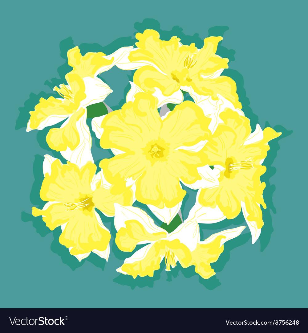 Narcissus Yellow Ball Royalty Free Vector Image