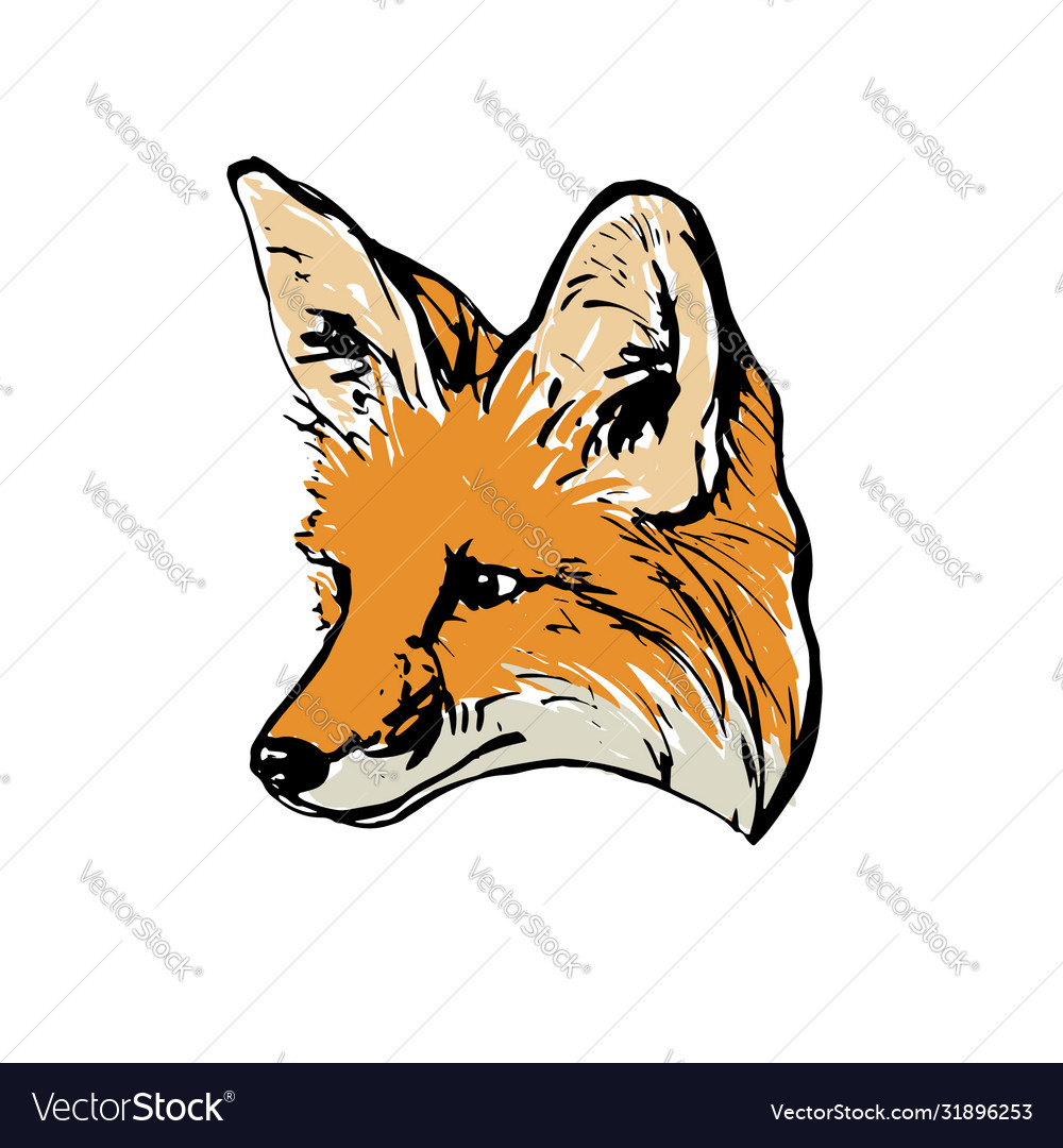Realistic Colored Drawing A Fox Head Royalty Free Vector