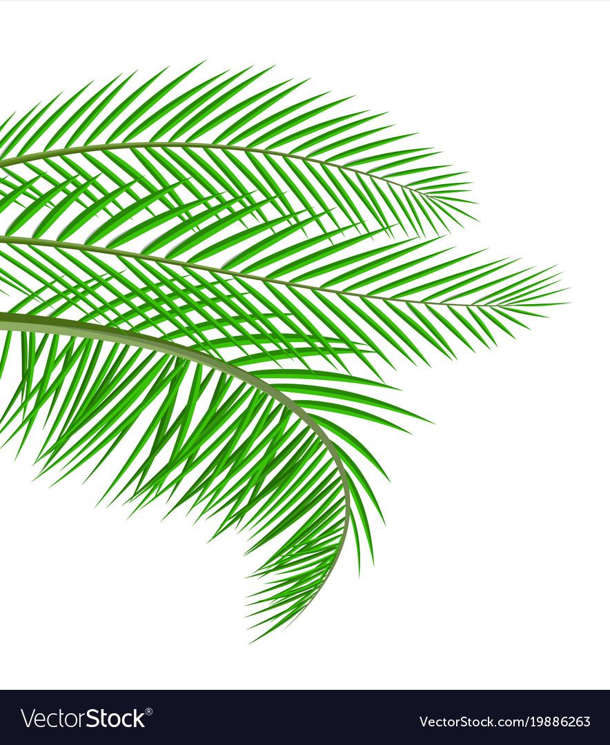 Tropical green leaves jungle leaves