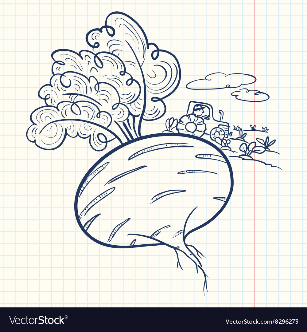 Doodle beet and farmer vector image
