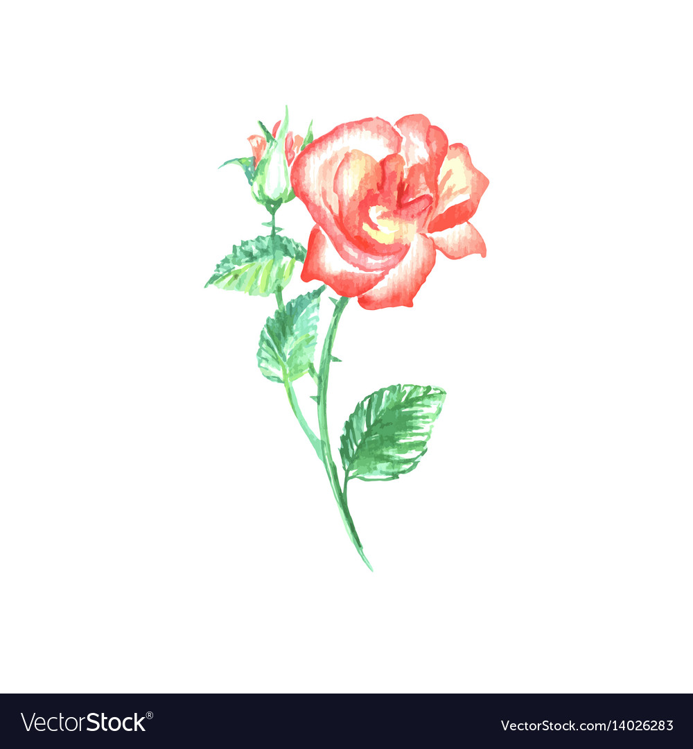Single red rose with green leaf