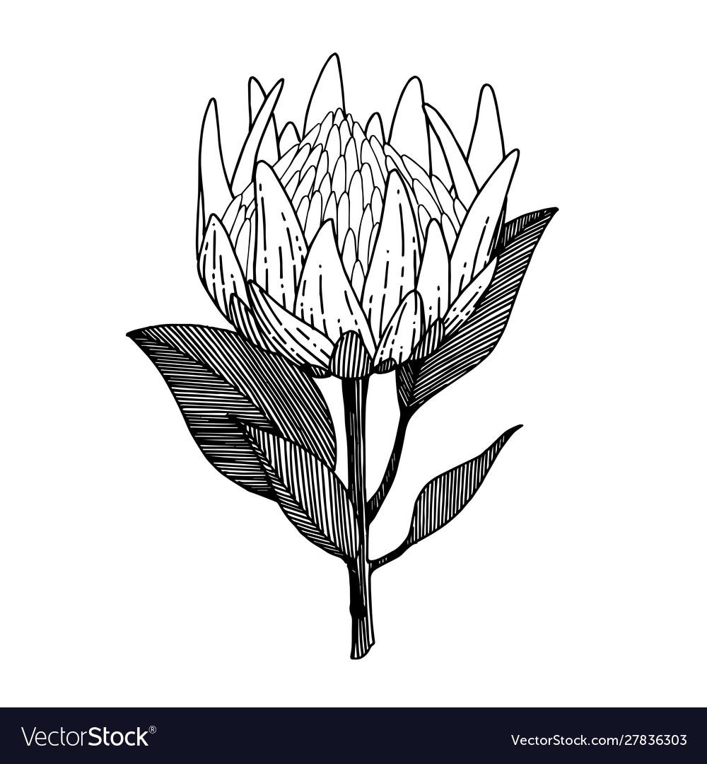 Exotic tropical hawaiian summer flower