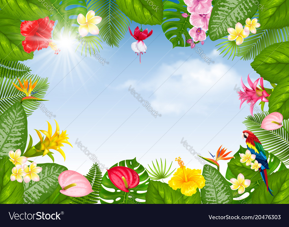 Summer tropical frame design Royalty Free Vector Image
