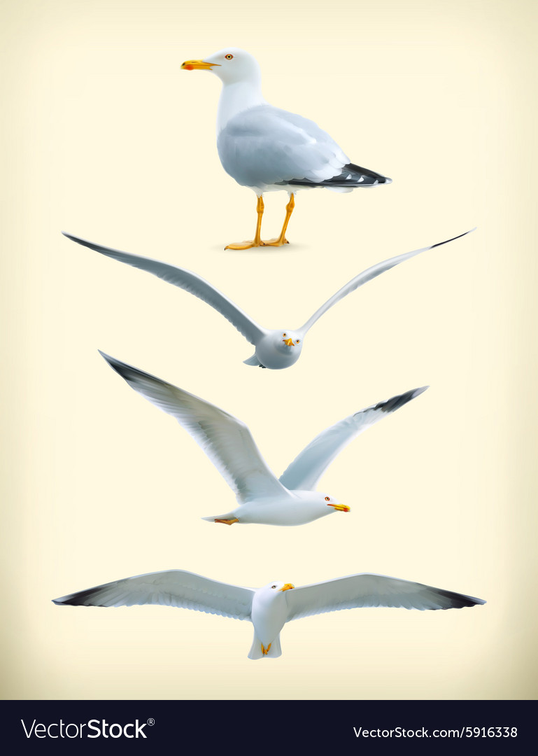 Seagulls icons