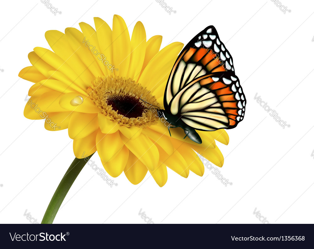 Nature summer yellow flower with butterfly vector image mightylinksfo