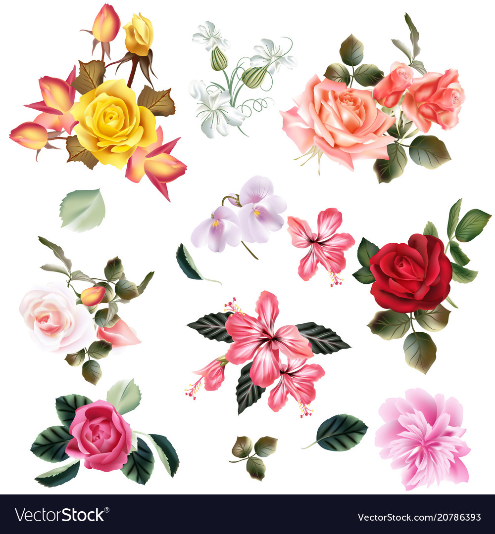 Big Set Of Realistic Flowers For Design Royalty Free Vector