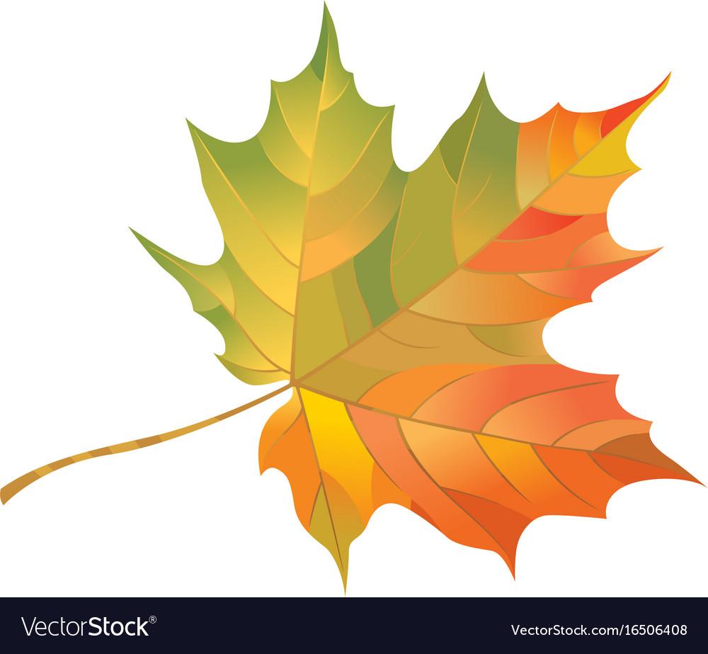 canadian maple leaf images - 1000×923