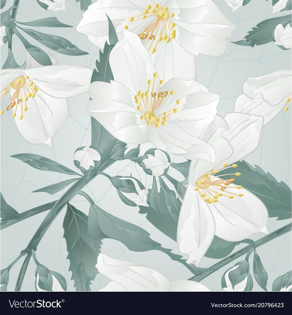 Seamless texture twig flower jasmine and buds