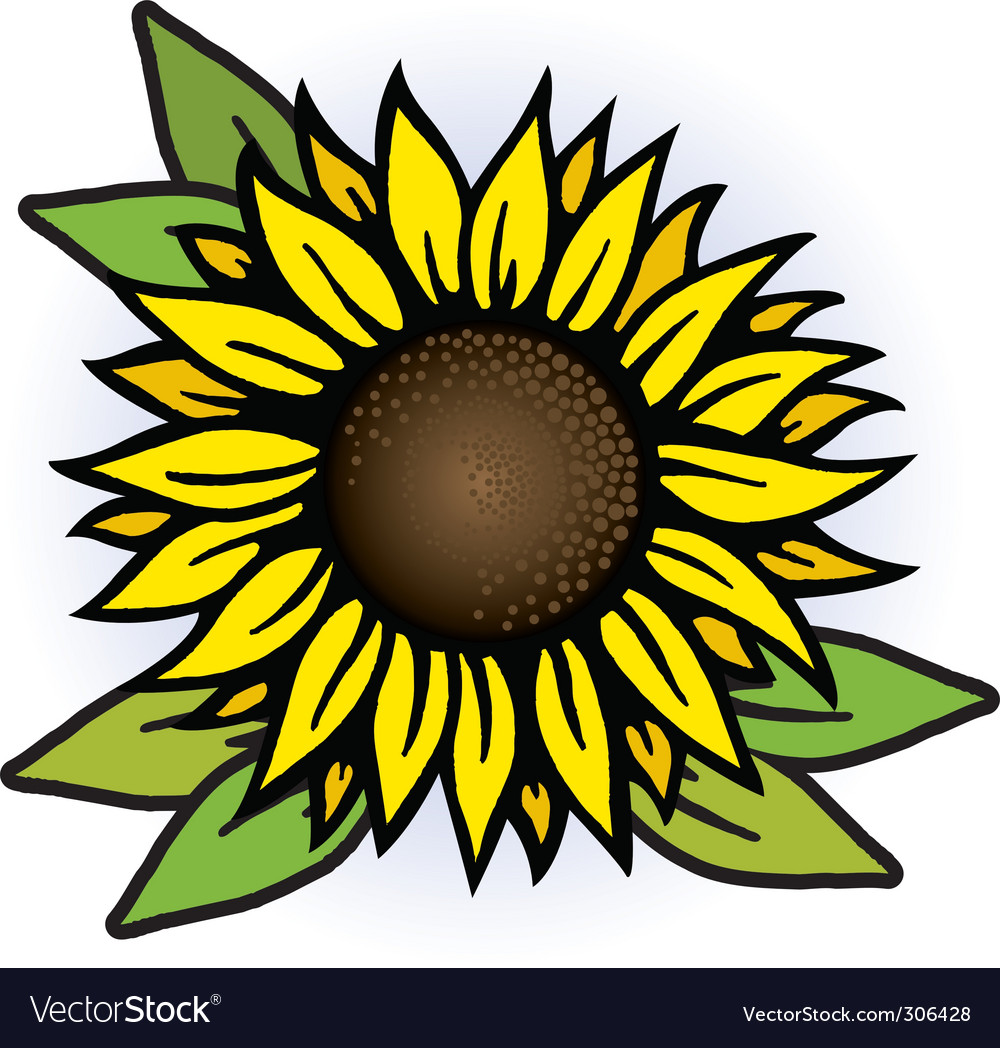 sunflower royalty free vector image vectorstock rh vectorstock com sunflower vector image sunflower vector watercolor