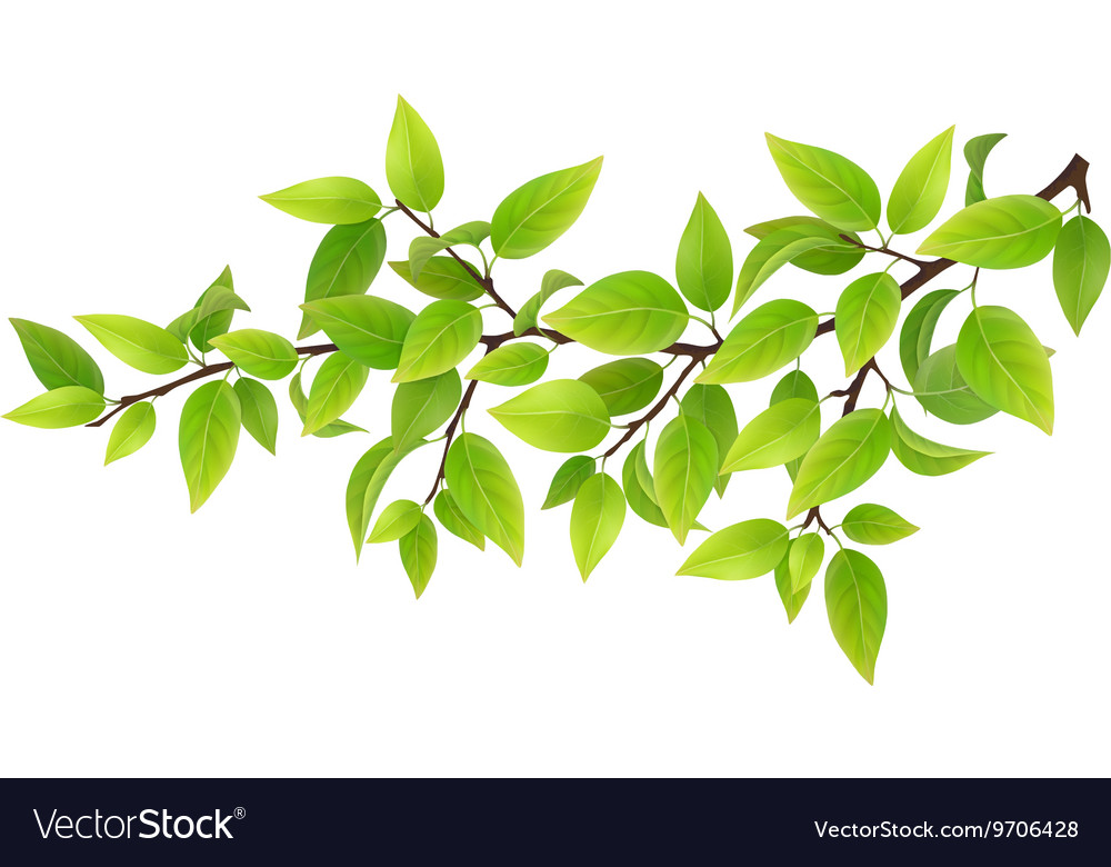tree branch with green leaves royalty free vector image rh vectorstock com tree branch vector png tree branch vector root