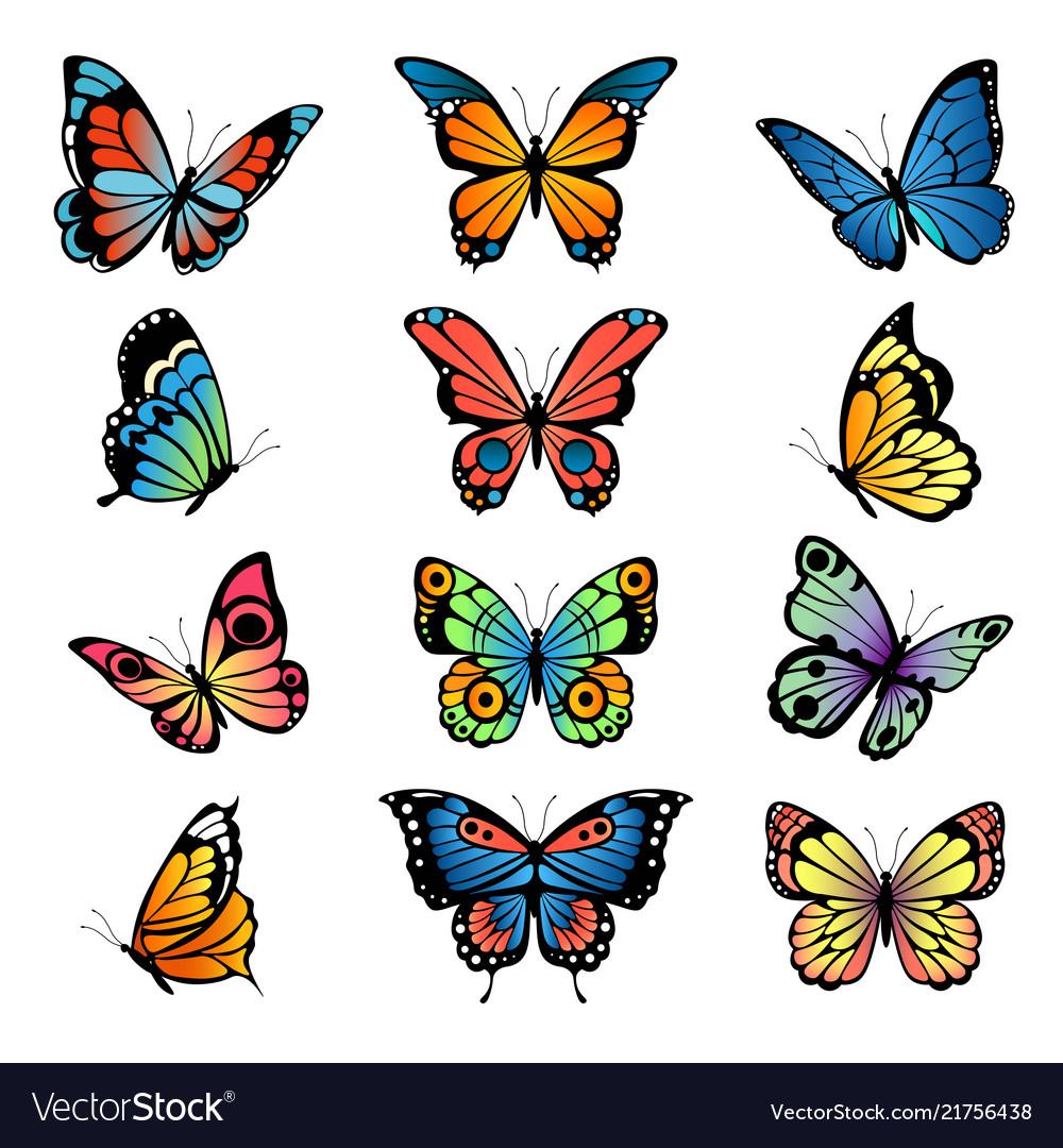 Various cartoon butterflies set