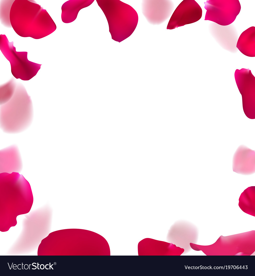 Template Wedding Invitation With Rose Petals Vector Image