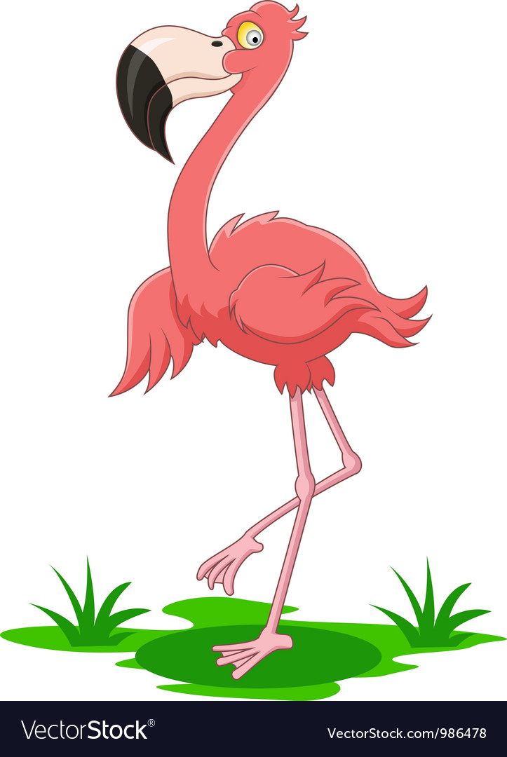 Flamingo cartoon