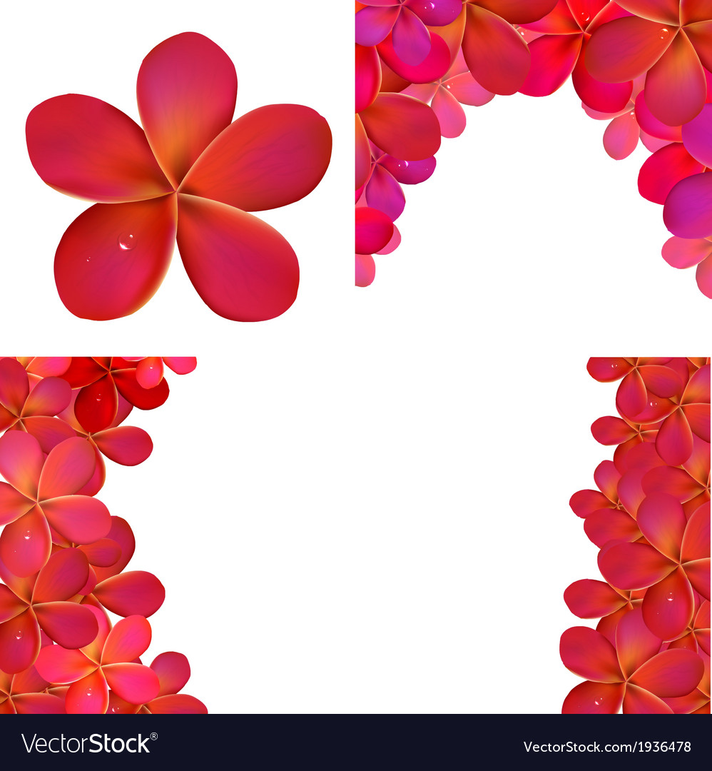 Pink Frangipani Set For Design