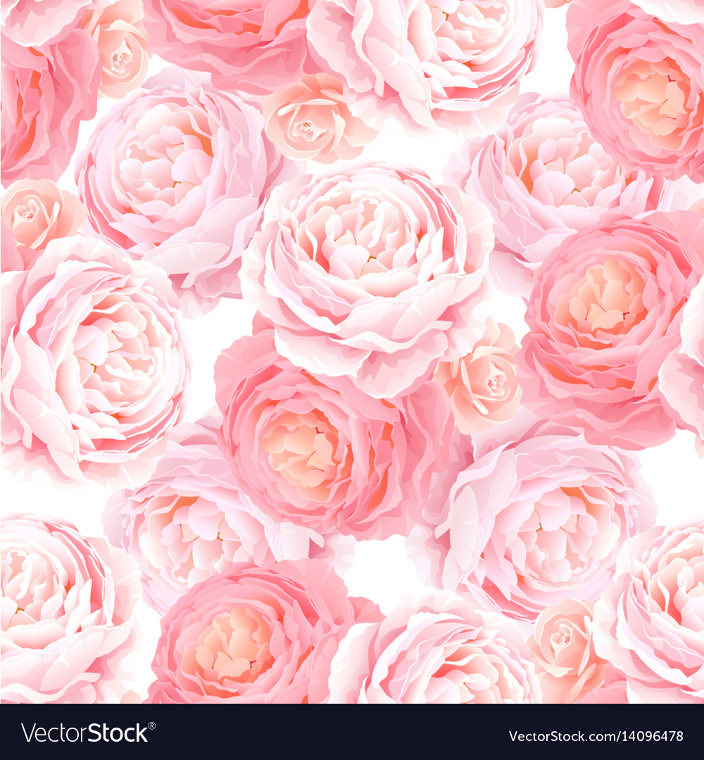 Seamless pattern with elegance color pink roses