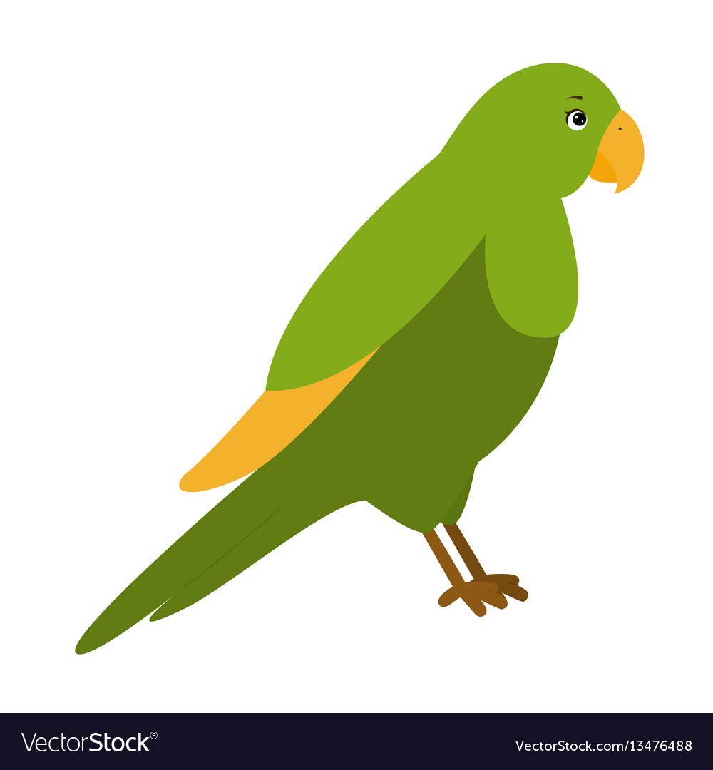 Parrot for children