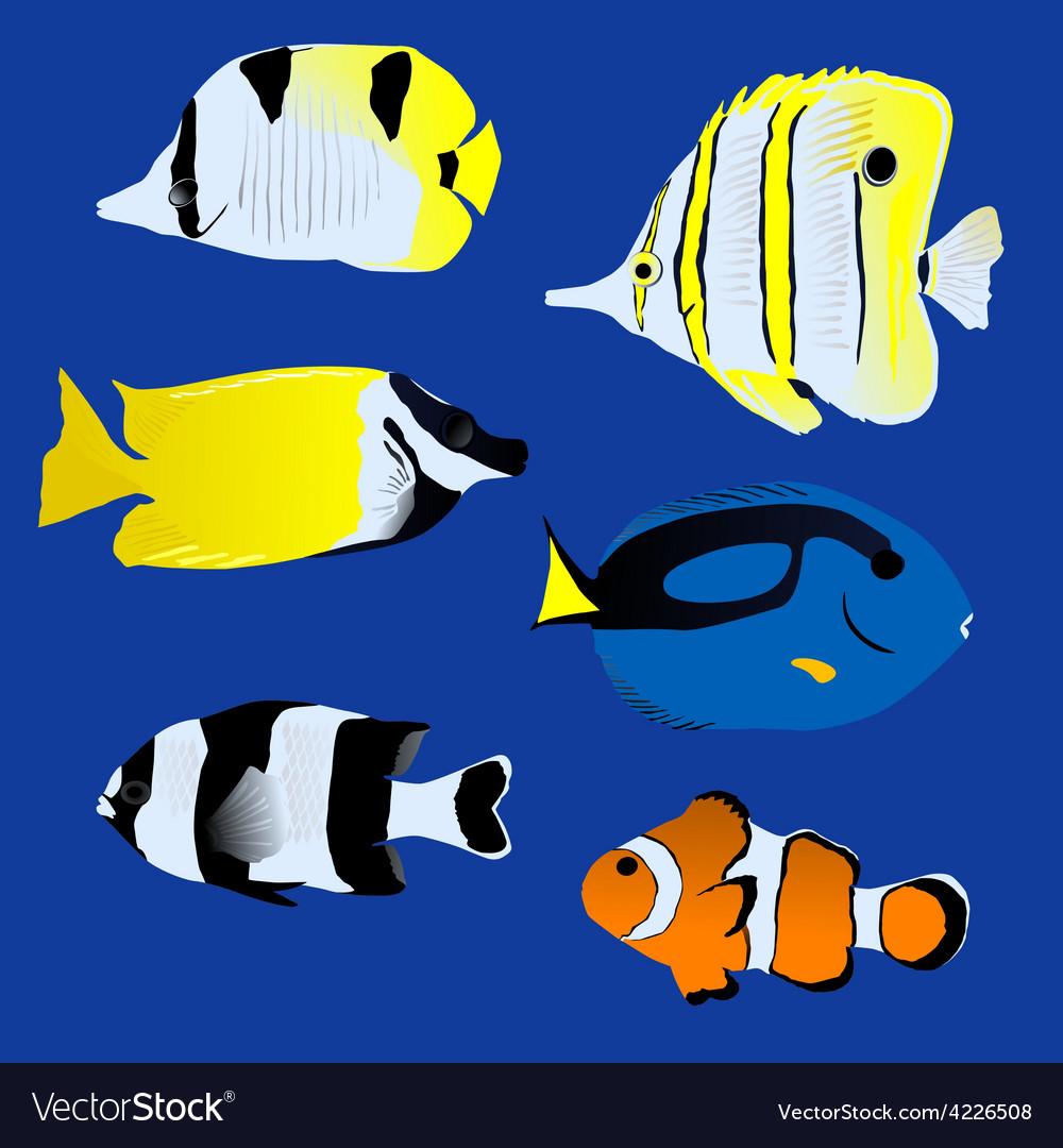 Aquarium great tropical fish collection