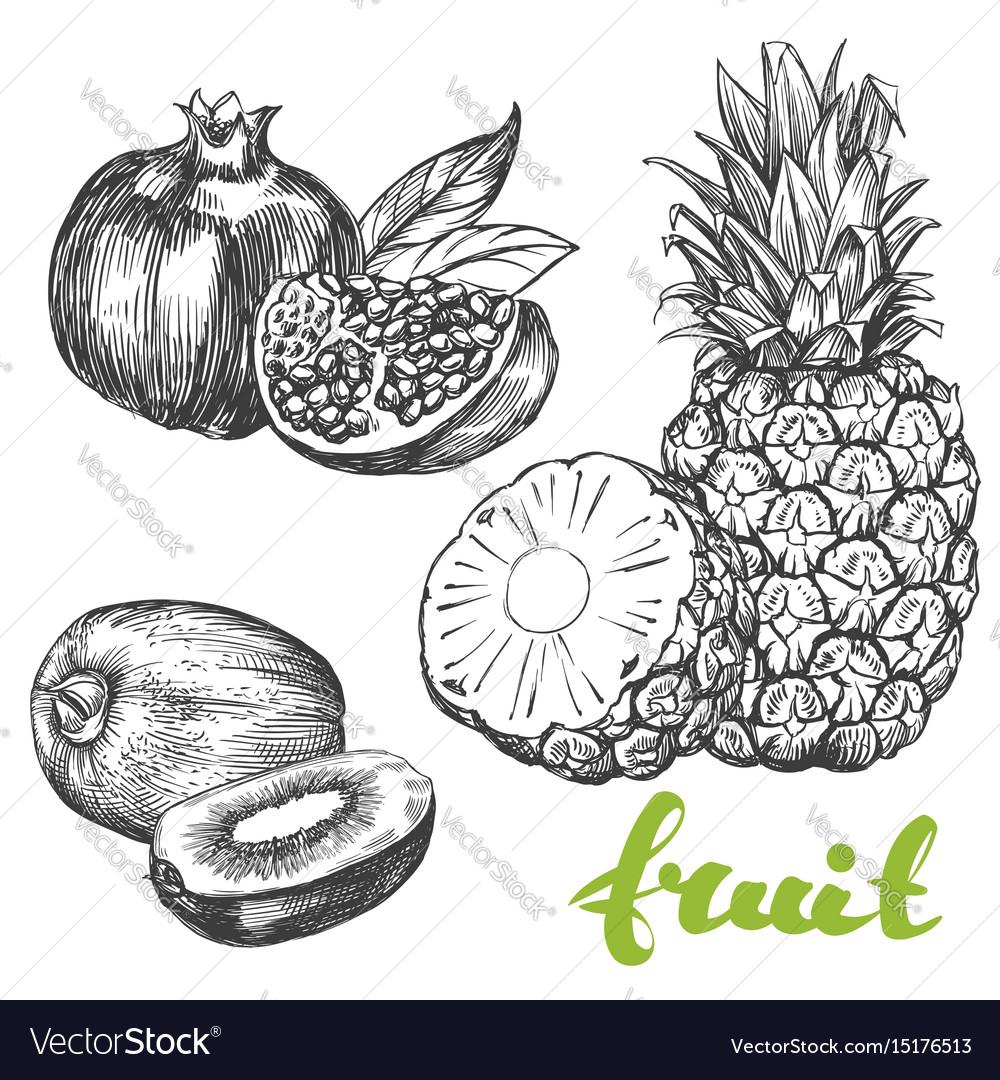 Fruit pomegranate kiwi pineapple set hand drawn vector image