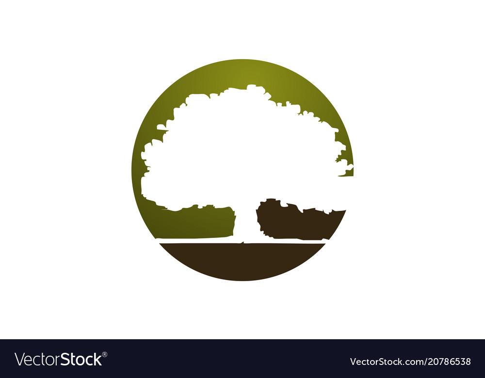 Oak Tree Logo Design Template Vector Image