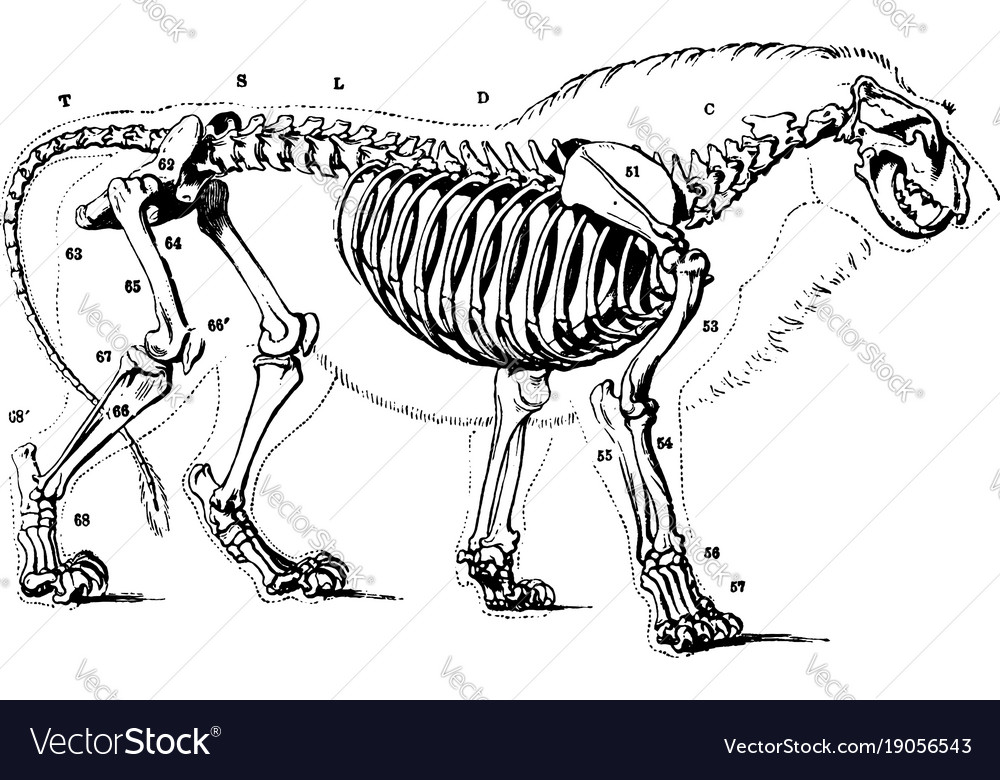 Lion Skeleton - Best Image and Description About Lion