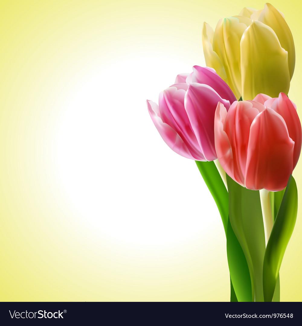 Tulips background Royalty Free Vector Image - VectorStock