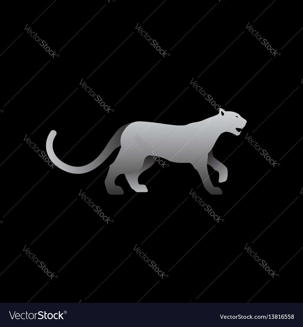 Gray panther vector image