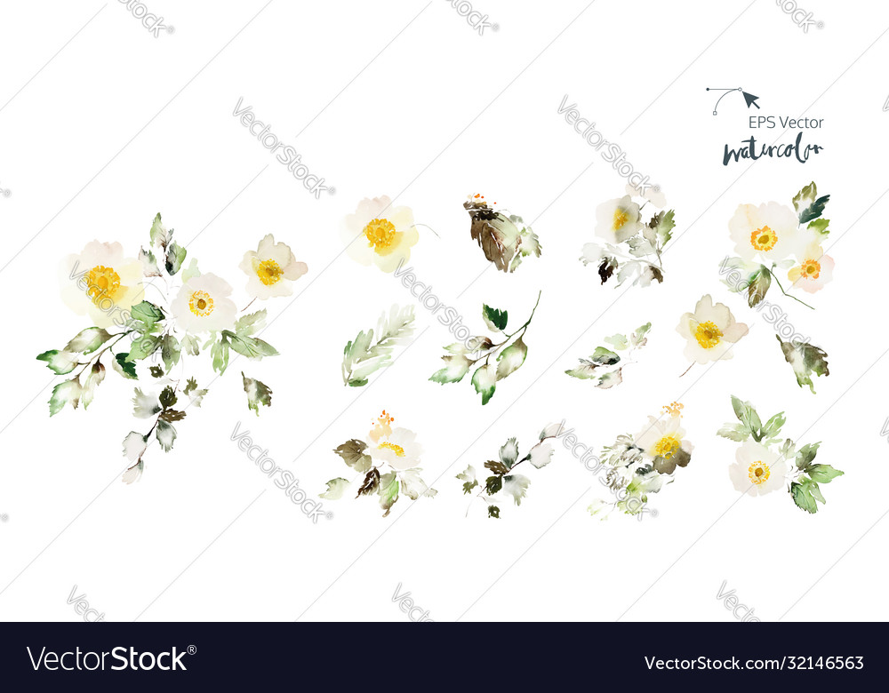 Set watercolor elements with flowers anemone