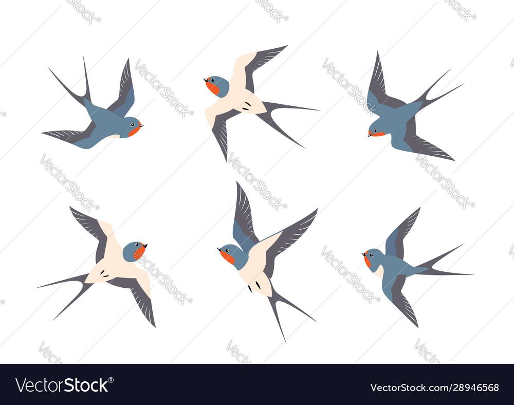 Set swallows birds in flight