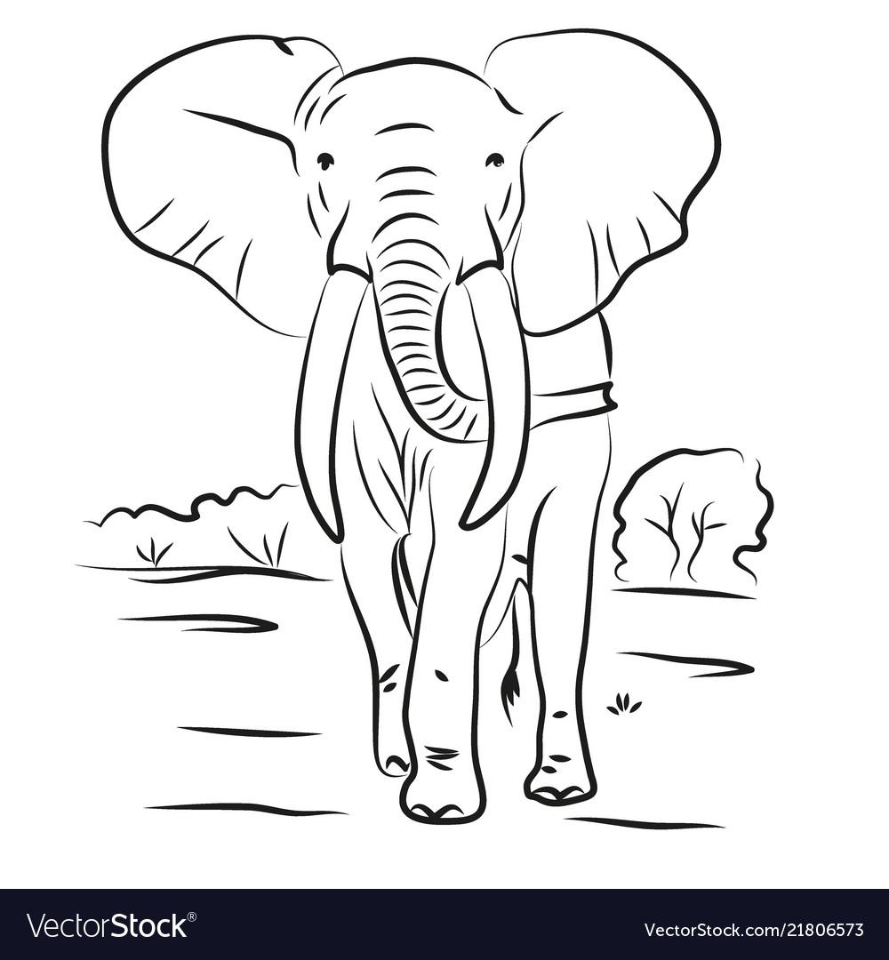 Elephant drawn contour black coloring