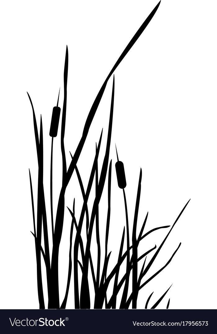 Silhouette of reed bush