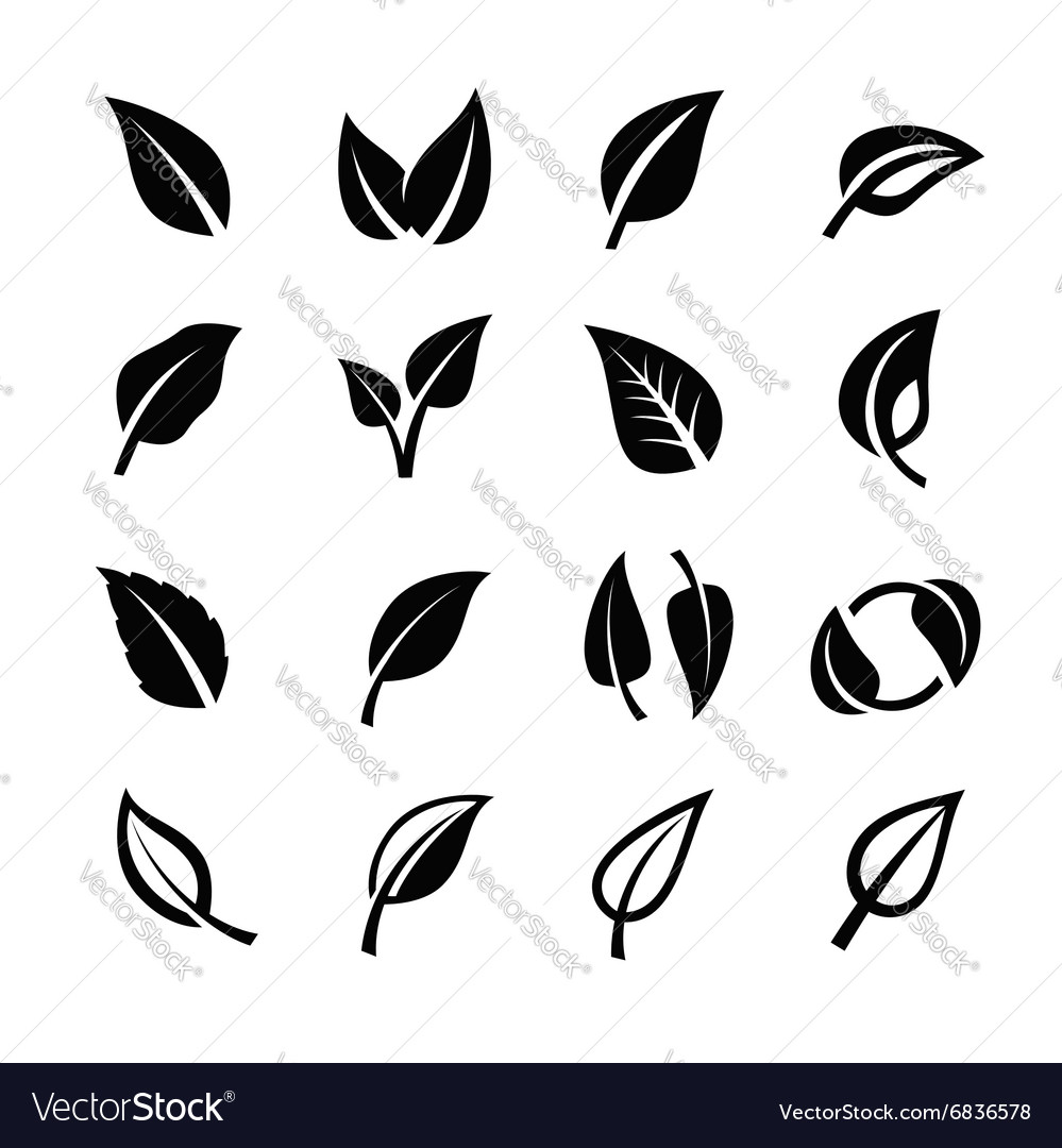 Leaf nature vector image