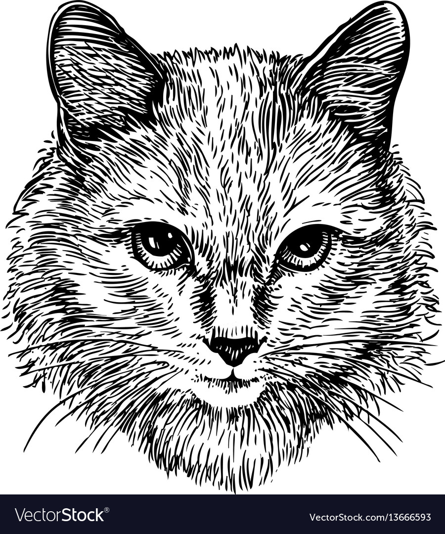 Hand drawn portrait of cute cat sketch art vector image