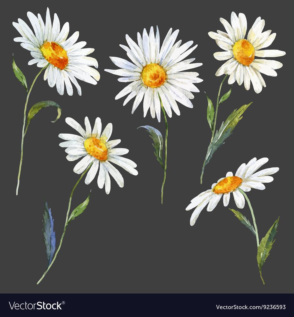 Watercolor daisy set