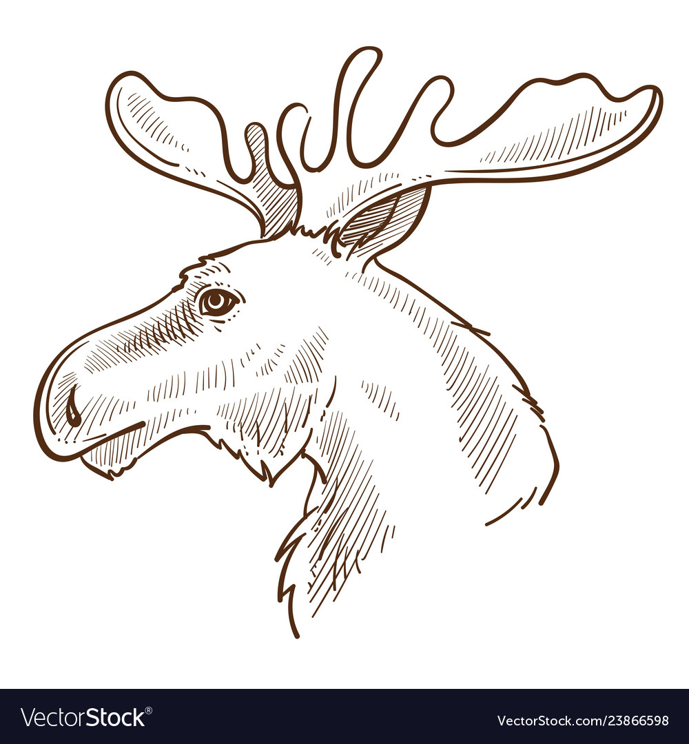 Moose or elk canadian symbol animal with horns vector